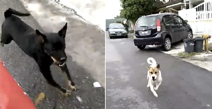Watch How This Malaysian Postman 'Revenge' After Getting Chased by Two Dogs - WORLD OF BUZZ