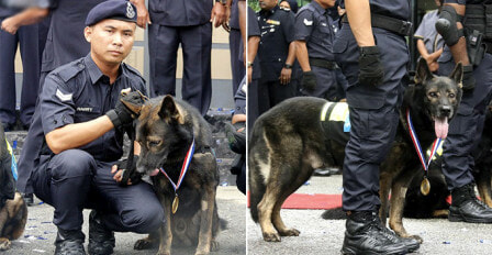 PDRM Sets Up First Ever K-9 Memorial To Honour The Sacrifices Of Police Dogs - WORLD OF BUZZ