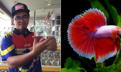 27yo M'sian Quits His Engineering Career to Become a Fish Breeder, Now Earns a Five-Figure Salary - WORLD OF BUZZ