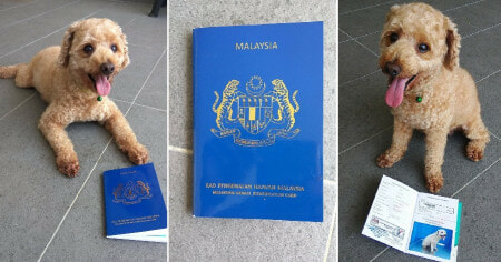 Did You Know That You Can Register for a Malaysian Animal Identification Card For Pets? - WORLD OF BUZZ 5