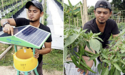 Four M'sian Graduates Quit Their Jobs To Plant Chillis, Set To Earn RM60,000 On First Harvest - WORLD OF BUZZ