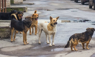 Johor Assemblyman Suggests Selling Stray Dogs to South Korea's Dog Meat Market - WORLD OF BUZZ 2