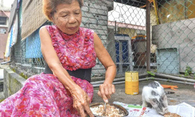 Loving Woman Tirelessly Feeds Strays Everyday In Seremban And Cleans Up After Them - World Of Buzz