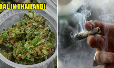 Thailand Has Just Become The First Southeast Asian Country to Legalist Medical Marijuana - WORLD OF BUZZ 2