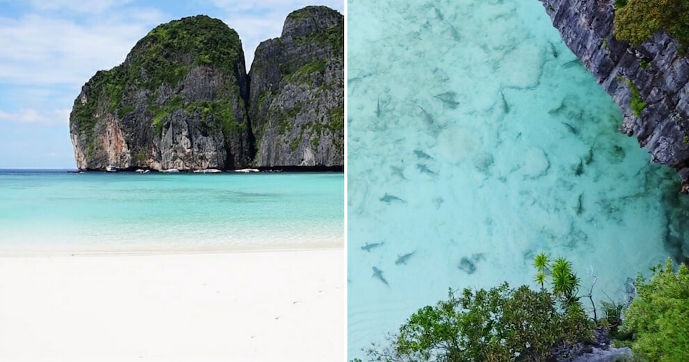 These Photos Show Maya Bay's Stunning Transformation Since It Was Closed For Rehabilitation - WORLD OF BUZZ 5