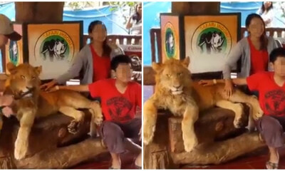 Wildlife Are Not Entertainers! Maya Karin Calls Public To Ban Wildlife Attractions - WORLD OF BUZZ