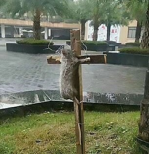 Chinese Student Crucifies Rat For Eating His Pet Turtle - WORLD OF BUZZ 2