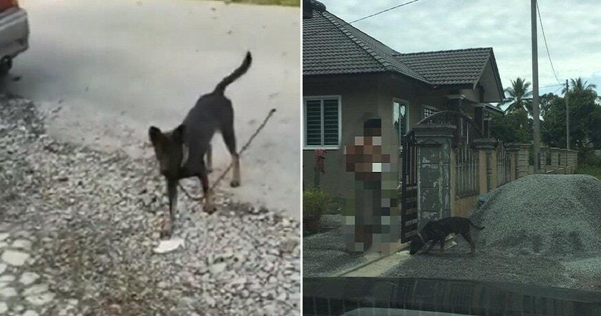 Dog Poisoned and Beaten Up - WORLD OF BUZZ 4