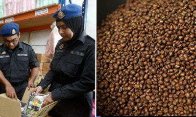 Famous Coffee Factory In Penang Shutdown After Rat Droppings Discovered During Raid - WORLD OF BUZZ
