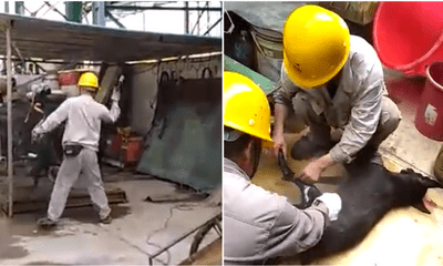 Foreign Workers In Kuantan Factory Allegedly Torturing And Slaughtering A Dog - WORLD OF BUZZ 4