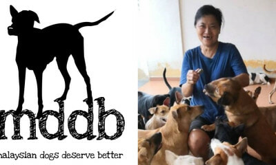 "Here's How You Can Help The Canine Shelter ""Malaysian Dogs Deserve Better"" - WORLD OF BUZZ 5"
