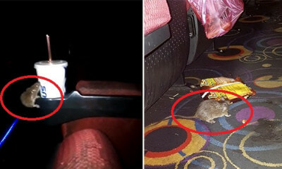 Man Shares How Rat Ruined His Cinema Experience in KK By Trying to Steal a Sip of His Soda - WORLD OF BUZZ