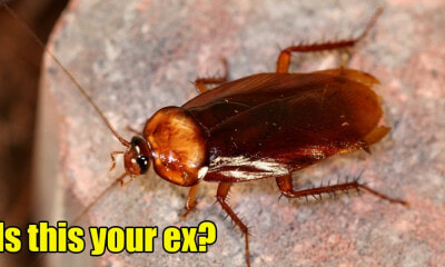 M'sians Can Name A Cockroach After Their Exes As The Perfect Gift For Valentine's Day - WORLD OF BUZZ 2