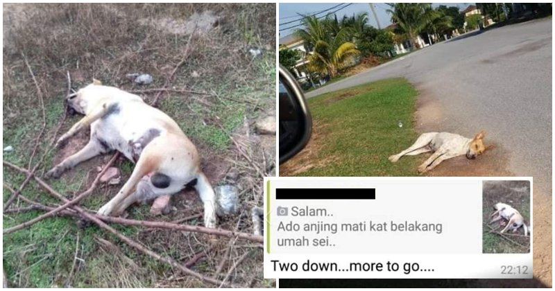 Netizens Angered by Man Who Murdered Dogs in Senawang and His Supporters - WORLD OF BUZZ 1