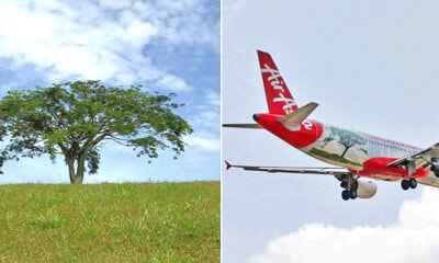 Once Featured On AirAsia Plane, This 40-Year-Old Iconic Tree In UPM Has Fallen - WORLD OF BUZZ 1