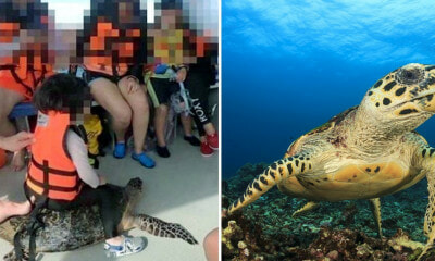Picture of Child Riding Endangered Sea Turtle Allegedly in Sabah Sparks Outrage Among Netizens - WORLD OF BUZZ 2