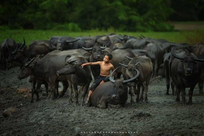 These Stunning Photos of A Terengganu Boy Playing With Buffalos Won International Awards - WORLD OF BUZZ 2