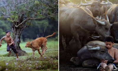 These Stunning Photos of A Terengganu Boy Playing With Buffalos Won International Awards - WORLD OF BUZZ 3