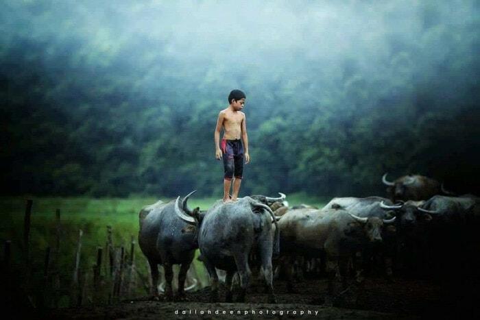 These Stunning Photos of A Terengganu Boy Playing With Buffalos Won International Awards - WORLD OF BUZZ