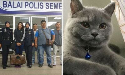 This M'sian Actress Filed A Police Report Over Her Missing Pedigree Cat - WORLD OF BUZZ