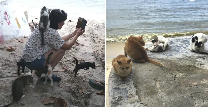 This M'sian Beach Is Home To Over 250 Cats And You Can Chill With Them By The Beach - WORLD OF BUZZ