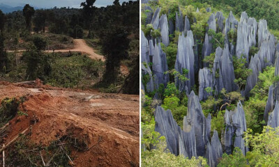 An Oil Palm Plantation is Reportedly Encroaching into Sarawak's Only UNESCO World Heritage Site - WORLD OF BUZZ