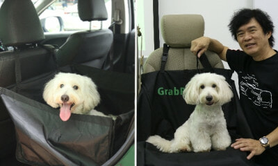 Grab Singapore Now Debuts GrabPet So You Can Travel With Your Four-legged Buddies! - WORLD OF BUZZ 6