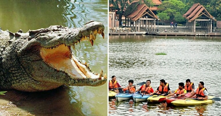 Irresponsible Person Dumps Crocodile Into Shah Alam Lake, Public Warning Issued - WORLD OF BUZZ