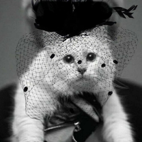 Karl Lagerfeld's Cat Richer Than All of Us As She Inherits Part Of RM1.55 Bil After Owner's Death - WORLD OF BUZZ 3
