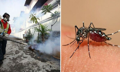 MOH Warns That Dengue Cases on The Rise Due to Different Strain of Virus Detected - WORLD OF BUZZ