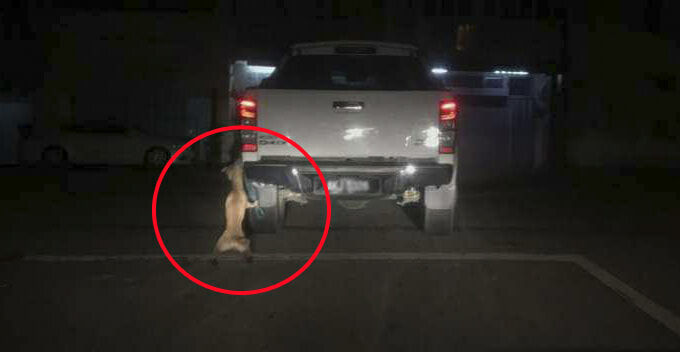 Poor Dog Tries To Free Itself After Getting Dragged Along The Road By Pickup Truck in M'sia - WORLD OF BUZZ