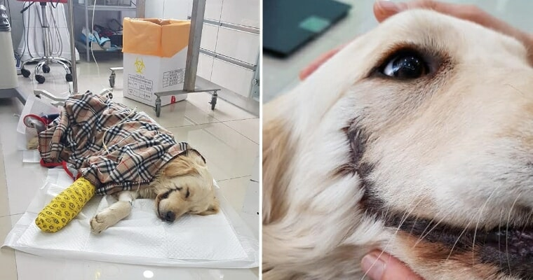 Somebody Cut This Puppy's Mouth Open Like Joker, Rescuers Find She's Still Happy To See Humans - WORLD OF BUZZ 7