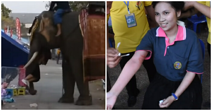Thai Girl Tries to Take Photo with Elephant, Gets Picked Up and Flung for 2 Minutes - WORLD OF BUZZ