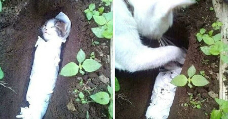 Watch: Mother Cat Buries Her Dead Baby Kitten Believed to be Killed By Humans - WORLD OF BUZZ 2