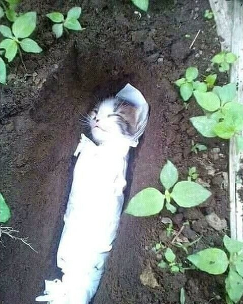 Watch: Mother Cat Buries Her Dead Baby Kitten That Was Believed to be Killed By Humans - WORLD OF BUZZ