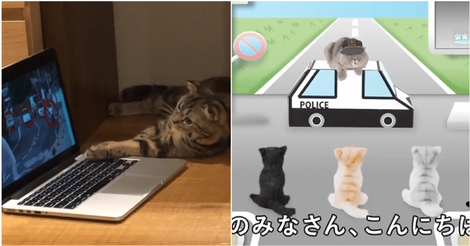 Watch: Road Safety Video For Cats Made By Animal Experts. No, We AreNot Kitten Around - WORLD OF BUZZ 4