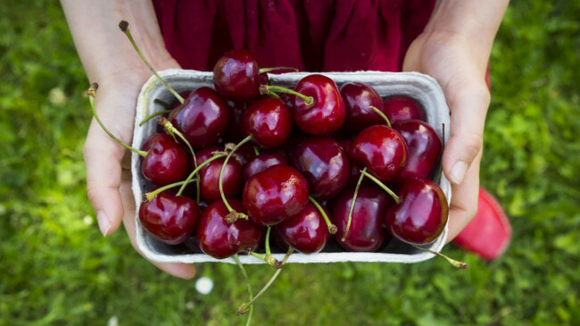 "Woman Eats 50 Cherries in Few Hours, Experiences ""Bloody"" Poop & Faints in Toilet - WORLD OF BUZZ"