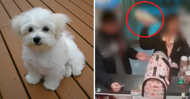 Woman Kills 3-Month-Old Puppy By Throwing It On Ground Because She Couldn't Get a Refund - WORLD OF BUZZ 5
