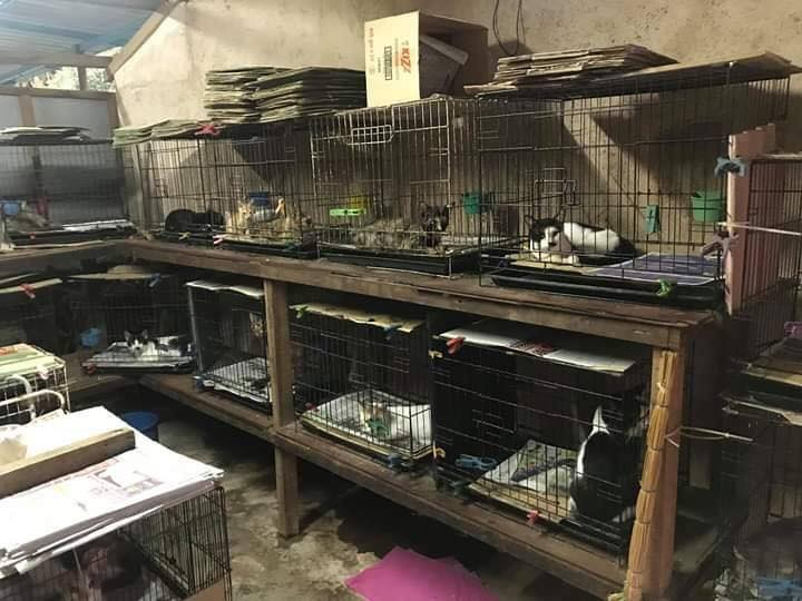Animal Lover Spends Three Quarters Of His Salary Each Month Taking Care Of His 80 Kittens - World Of Buzz 3