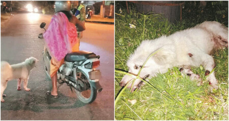 Dog Severely Injured After Being Tied to Motorcycle and Dragged Along Road in Kampar - WORLD OF BUZZ