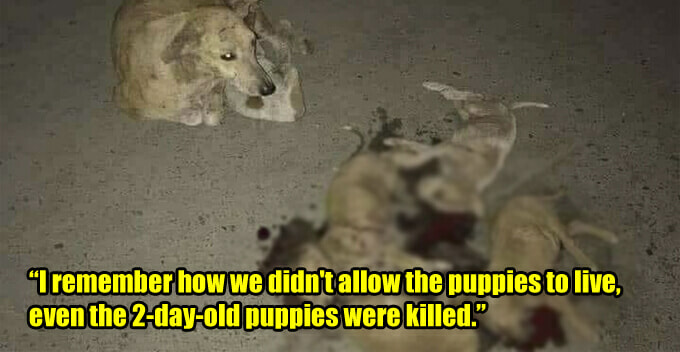 Ex-Town Council Shares How His Baby Paid For His Sin Of Killing Stray Dogs In Viral Fb Post - World Of Buzz