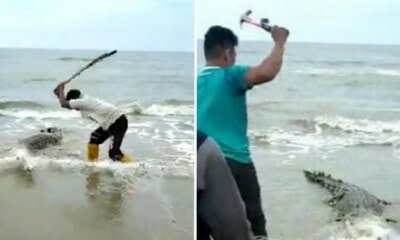Footage Of People Savagely Beating Trapped Crocodile With Hammers And Sticks Goes Viral, Netizens Horrified - WORLD OF BUZZ 3