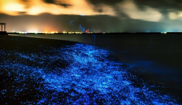 For Under Rm45, You Can Float Among Luminous Plankton & More At This Beautiful Cambodian Location - World Of Buzz 1