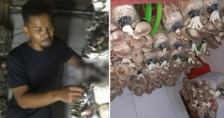 Graduate Unable To Find Work For Four Years Now Makes Living Selling Mushrooms On Shopee, Netizens Inspired - World Of Buzz 3