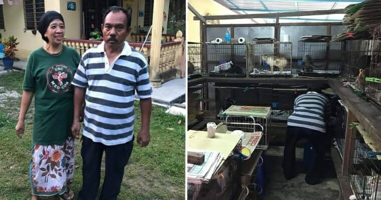 M'sian Animal Lover Spends Three Quarters Of His Monthly Salary To Feed His 80 Kittens - World Of Buzz