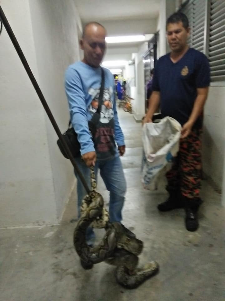 M'sian Teen Shocked When She Woke Up & Found 10-Foot-Long Python Around Her Neck - WORLD OF BUZZ