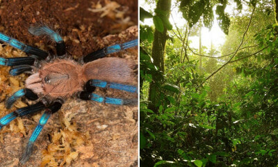 UK Scientists Accused of Smuggling Newly Discovered Species of Spider From Malaysia, Netizens Outraged - WORLD OF BUZZ