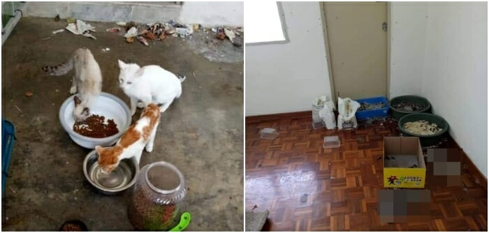 8 Cats Found Starved to Death After Being Abandoned by Owner in Cheras Home for Over a Month - WORLD OF BUZZ 2