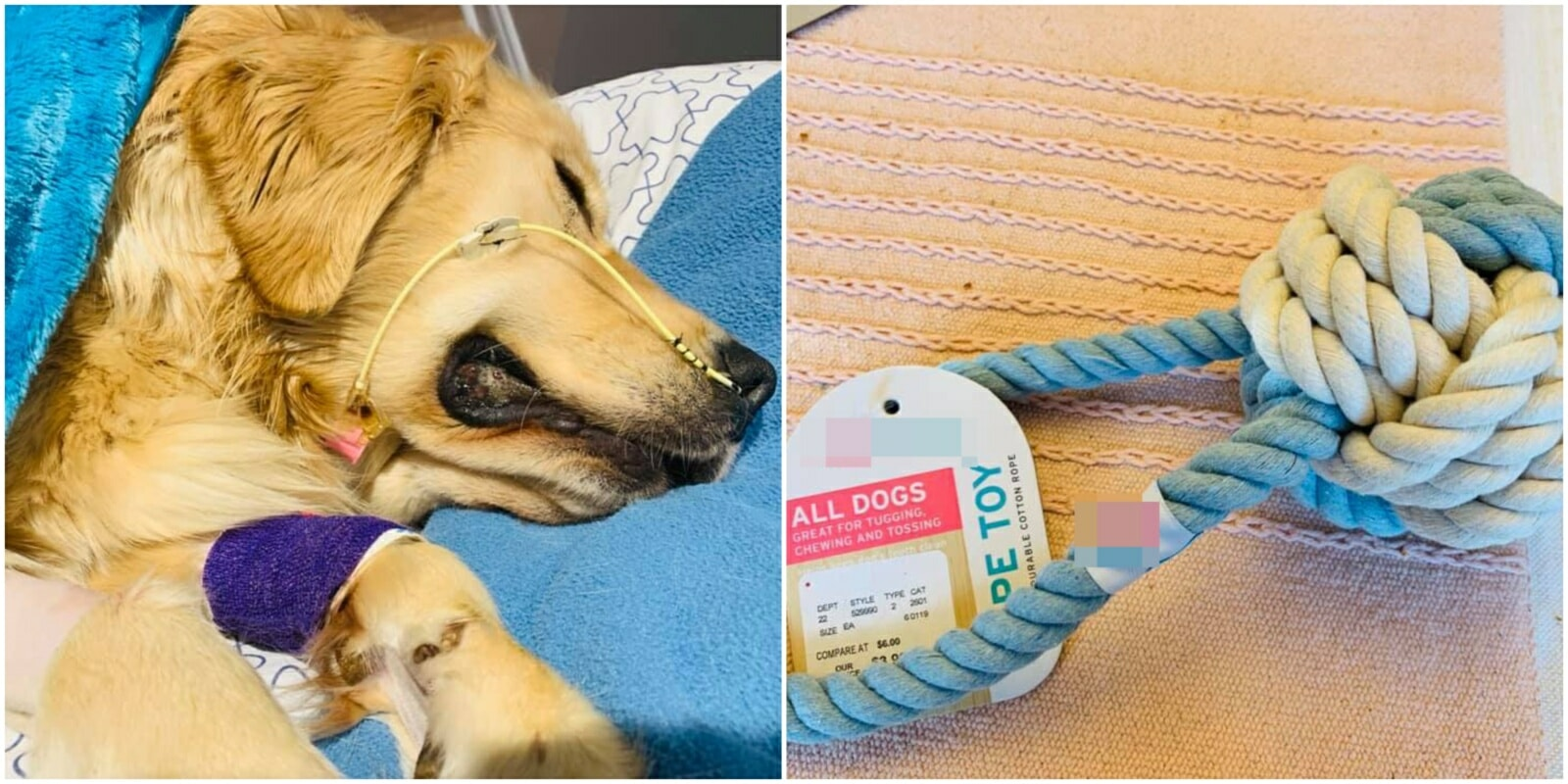 Woman Warns of Rope Toy Dangers After Her 1yo Dog Accidentally Swallowed It & Died - WORLD OF BUZZ