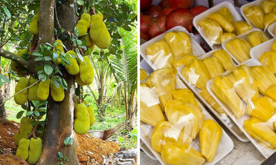 "Article by UK-Based Portal Calling Jackfruit An ""Ugly, Smelly, & Unharvested Pest-Plant"" Goes Viral & Asians Are Not Having It - WORLD OF BUZZ 2"